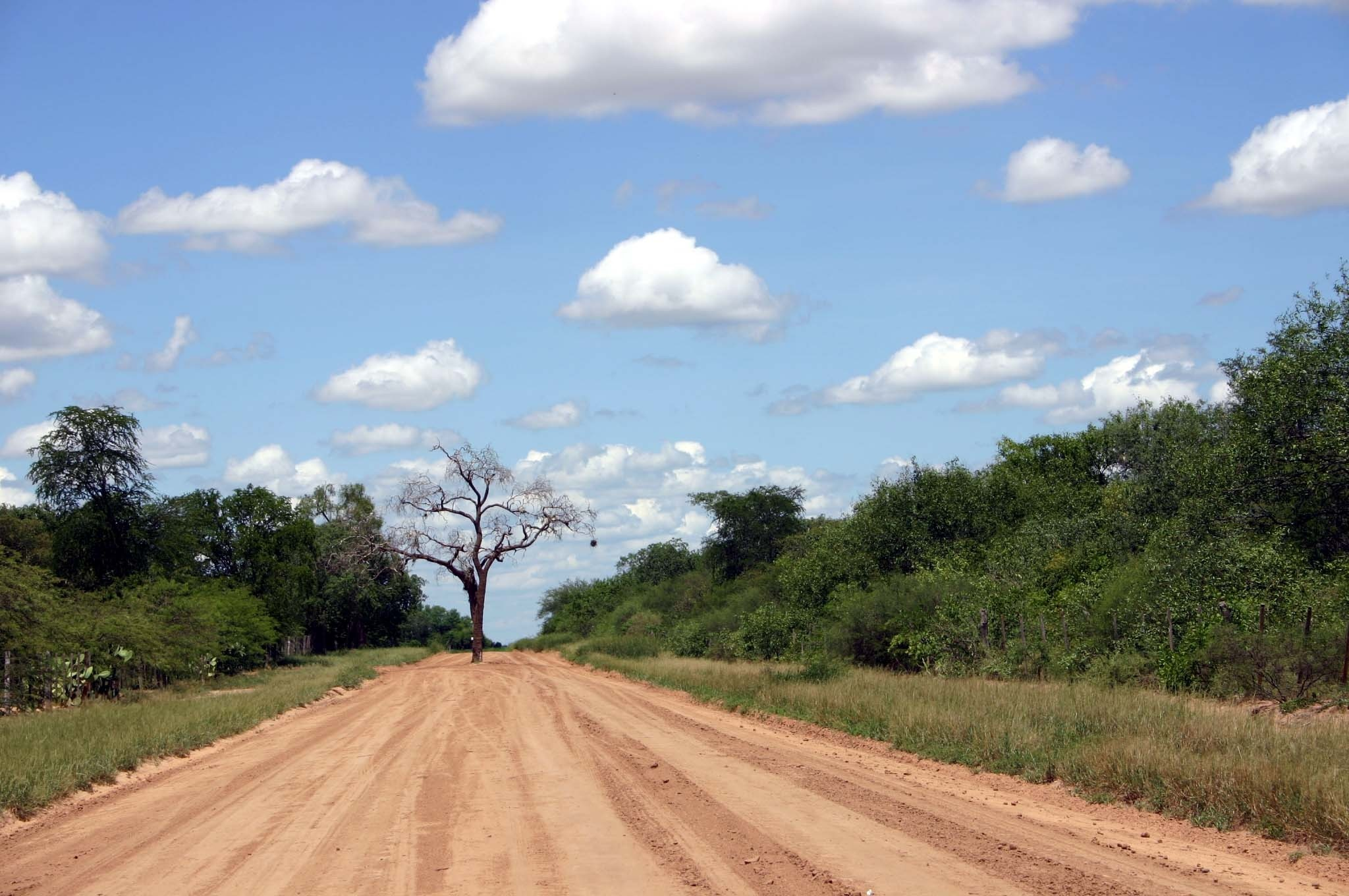 Staubige Pisten im Chaco Paraguays