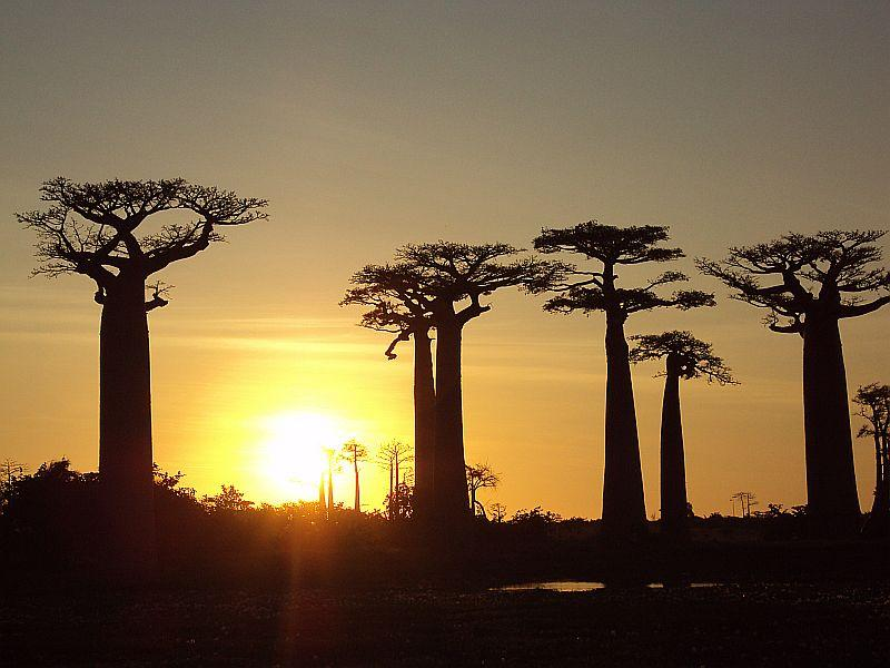Sonnenuntergang auf Madagaskar