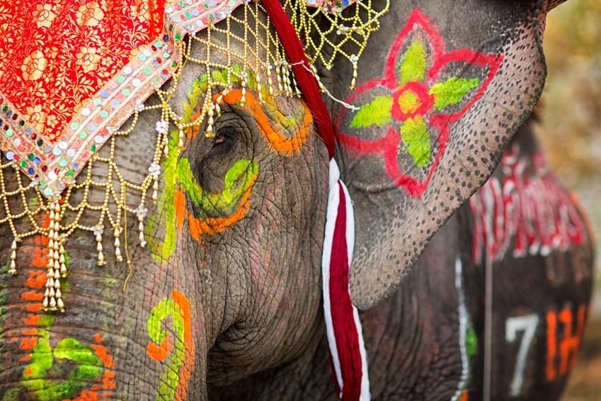 Farbenprächtig geschmückter Elefant