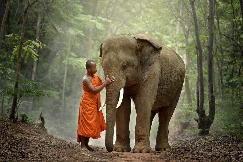 Ein buddhistischer Mönch unterwegs mit einem Elefanten