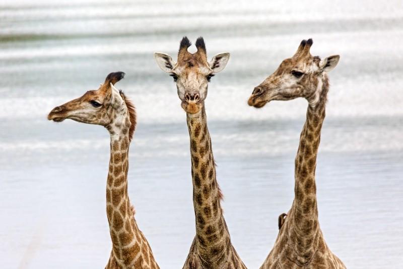 Tierbeobachtung in diversen Wildreservaten