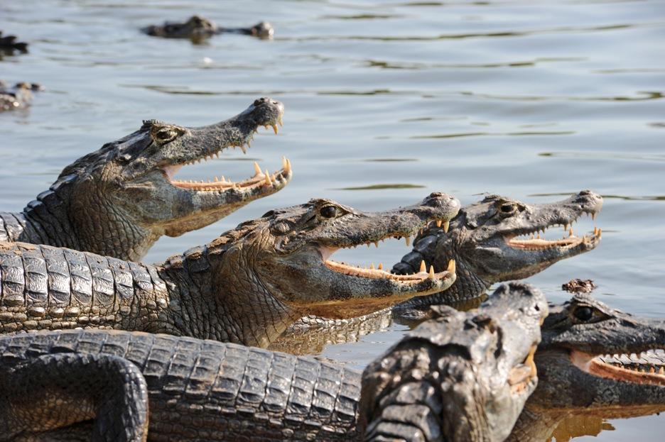 Tierbeobachtung auf unserer Südamerika-Rundreise im Pantanál