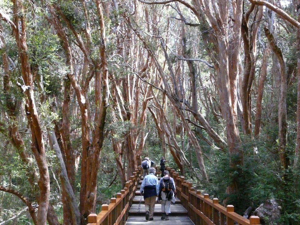 Wanderung durch den Myrtenwald bei La Angostura