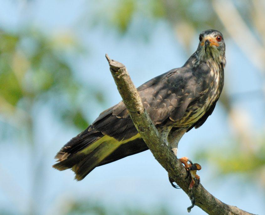 Fantastische Vogelwelt auf unserer Kolumbien-Privatreise