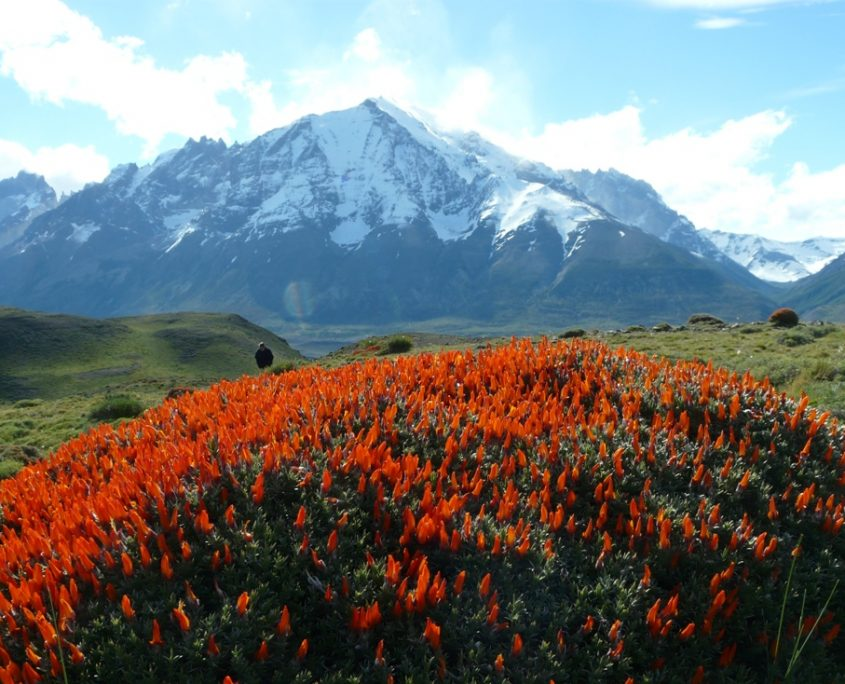 Farbenpracht im patagonischen Chile