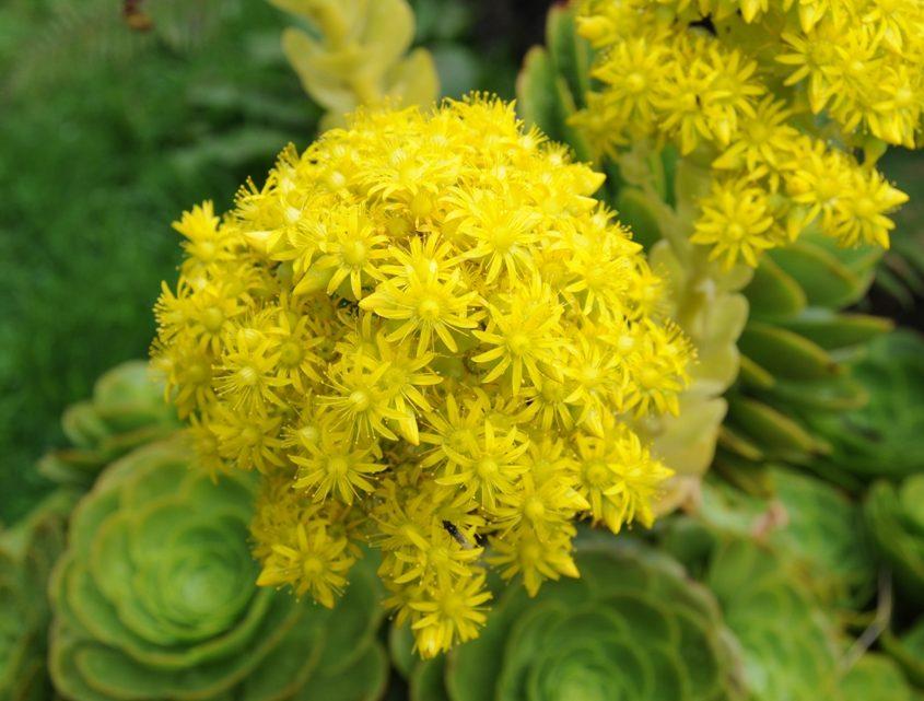 Pflanzenvielfalt im Paramo von Ecuador