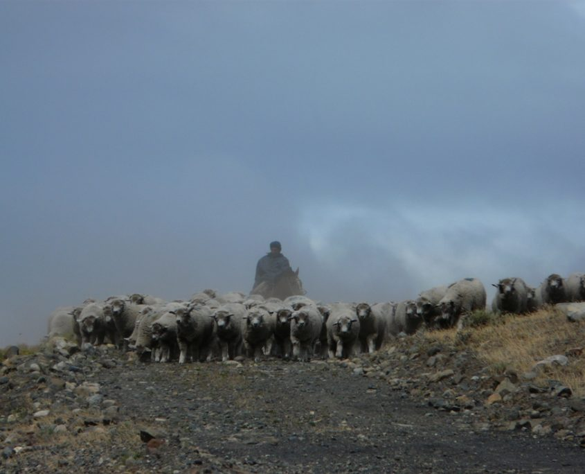 Patagonien pur in Argentininen