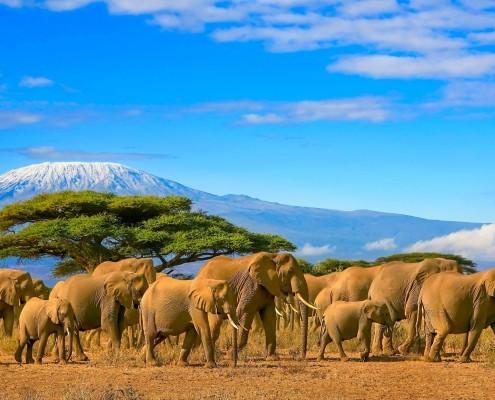 Elefanten vor gigantischer Kulisse