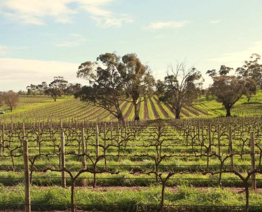 Weinanbaugebiet Barossa Valley
