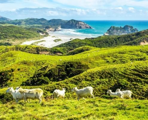 Traumhafte Landschaft in Neuseeland